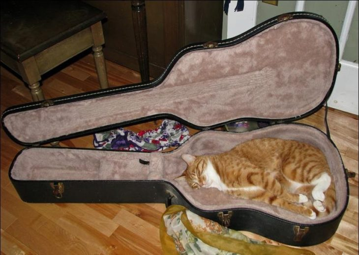 guitar-cat