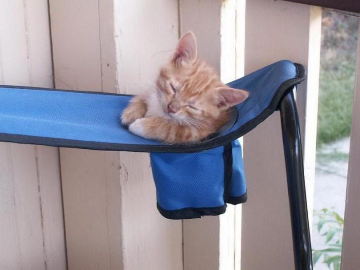 un gato que se cree vaso
