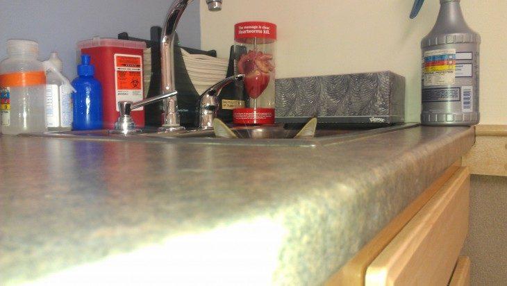 gato en la cocina