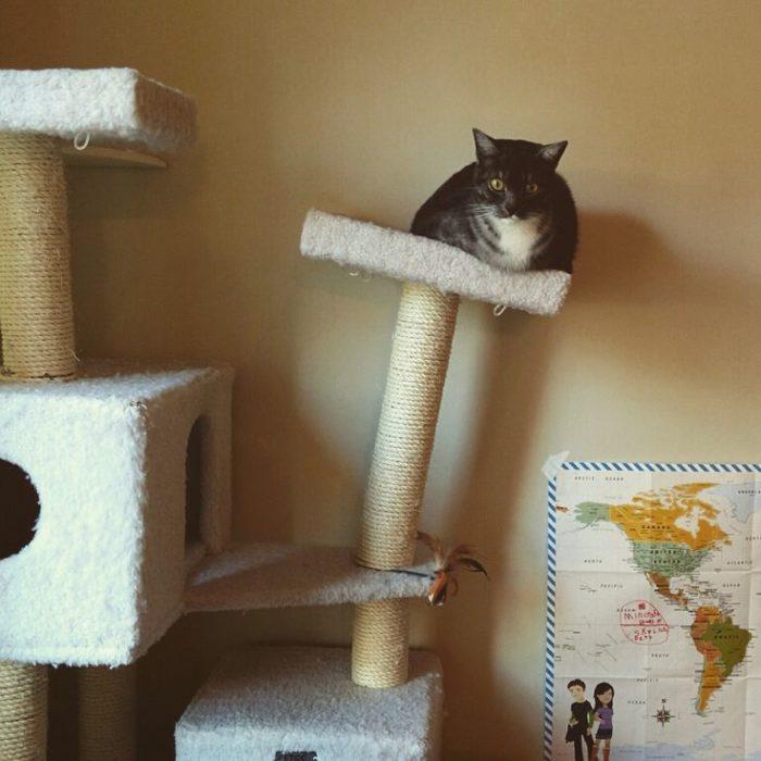 gato haciendo equilibrio