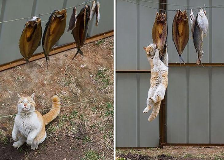 gato roba comida