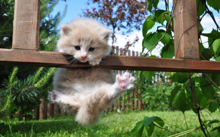 tierno gatito bebé hermoso precioso mi vida