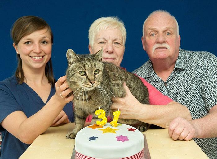 Gato y sus dueños con un pastel de 31 aniversario