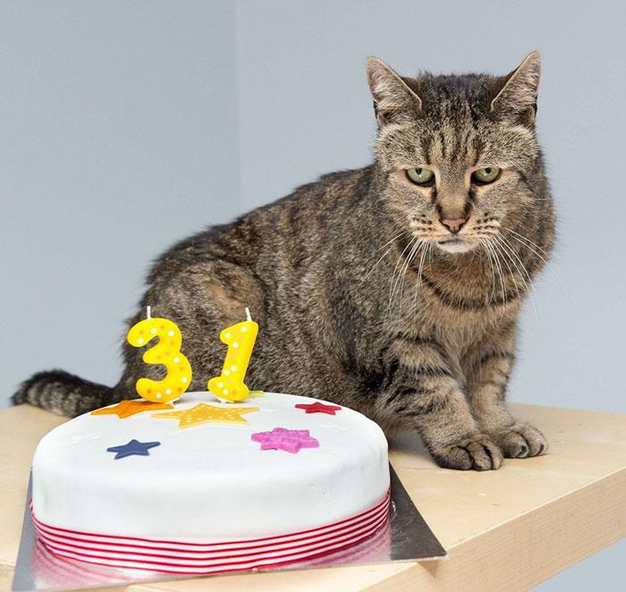 Gato y un pastel con el número 31