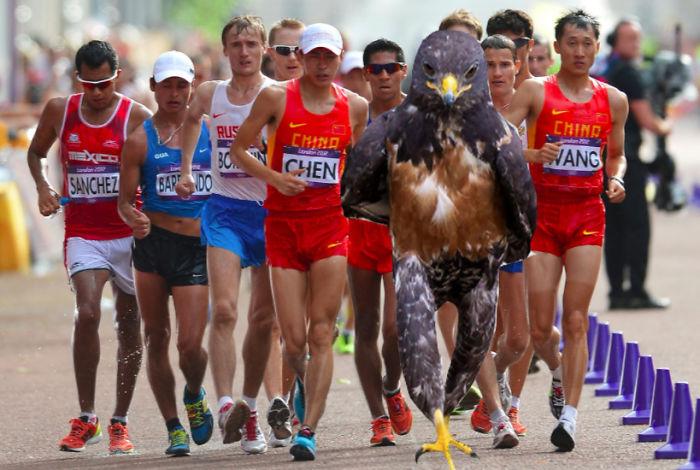 Halcón Batalla PS - en un maratón