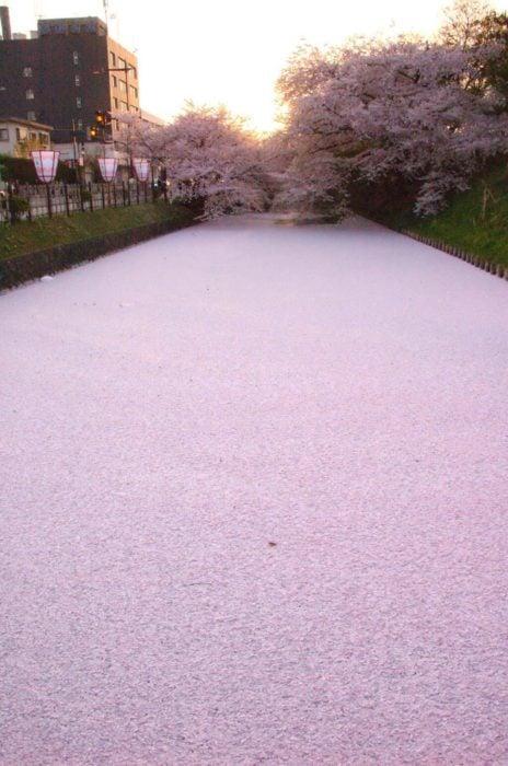 Río de cerezos