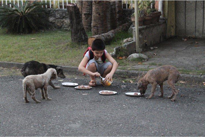 perritos callejeros