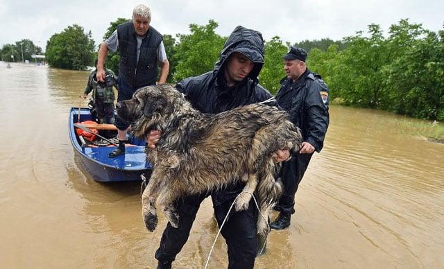 hombres rescatan perro de inundaciones