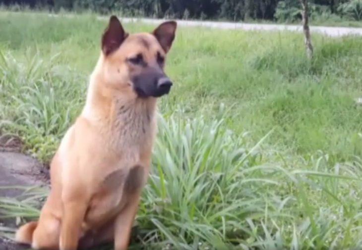 Loung un perro que esperó todo un año a que sus dueños volvieran