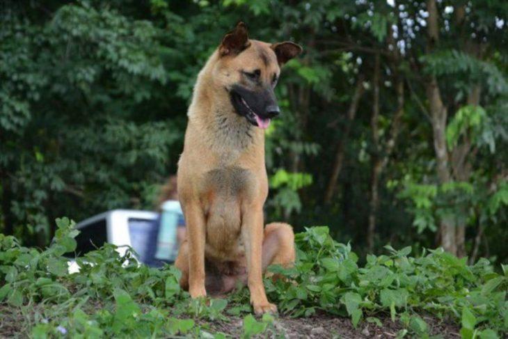 Loung perro de Tailandia esperando a sus dueños