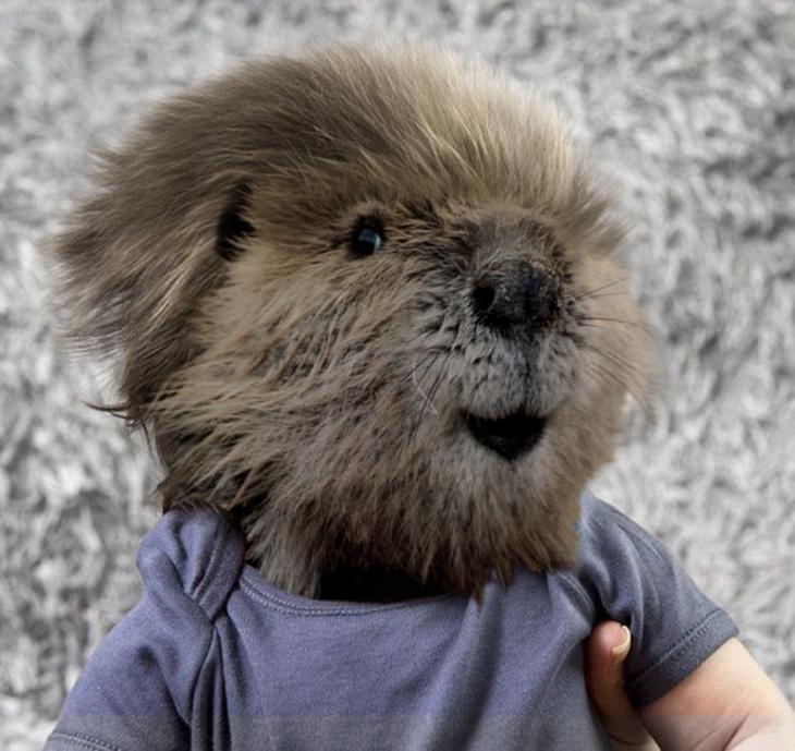 niño con cara de marmota