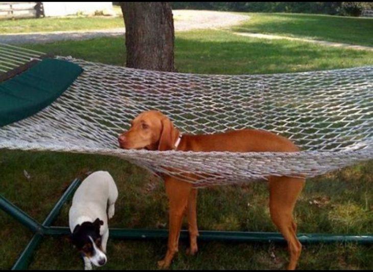 perro atrapado