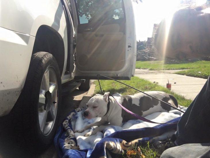 Perro abandonado al pie de una camioneta