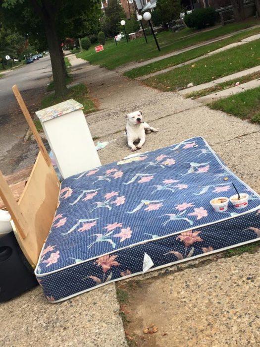 Familia abandona a perro en la calle