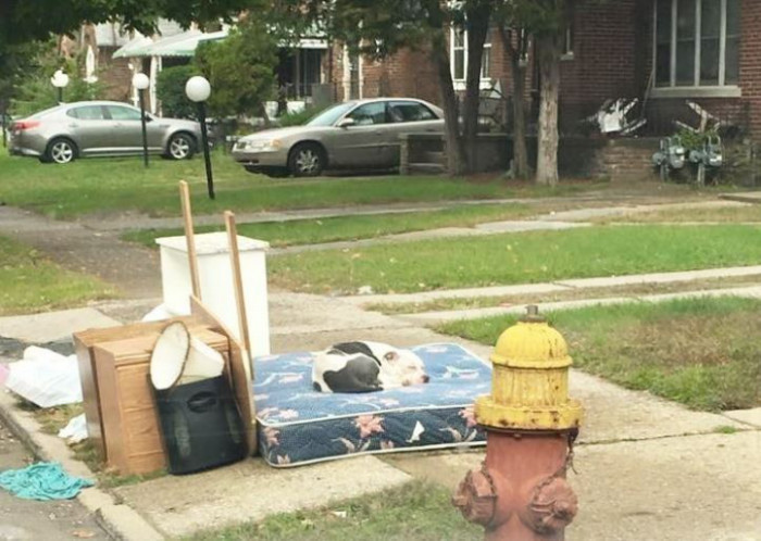 Perro abandonado acostado sobre colchon