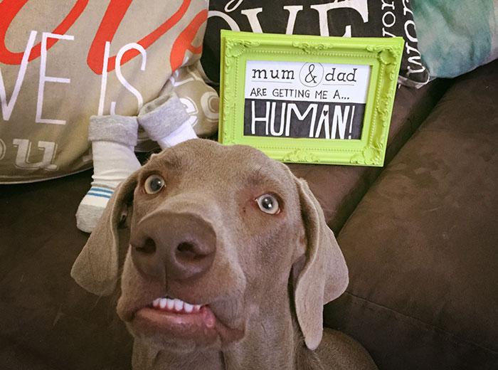 perro con cara de asustado