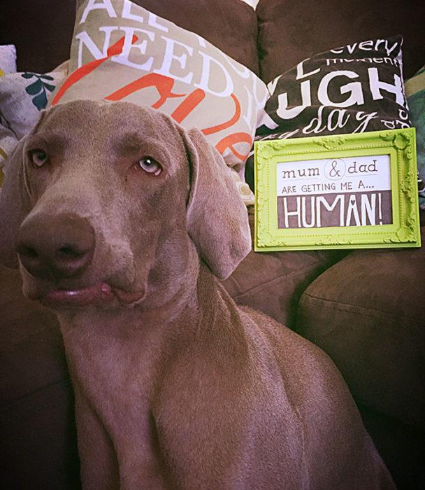perro nefasto con un letrero que dice: mama y papá me van a dar un HUMANO!