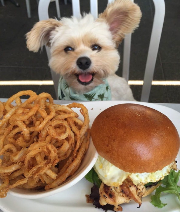Perro rescatado comiendo aros de cebolla