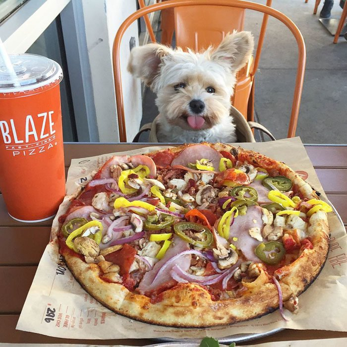 Perro rescatado comiendo pizza