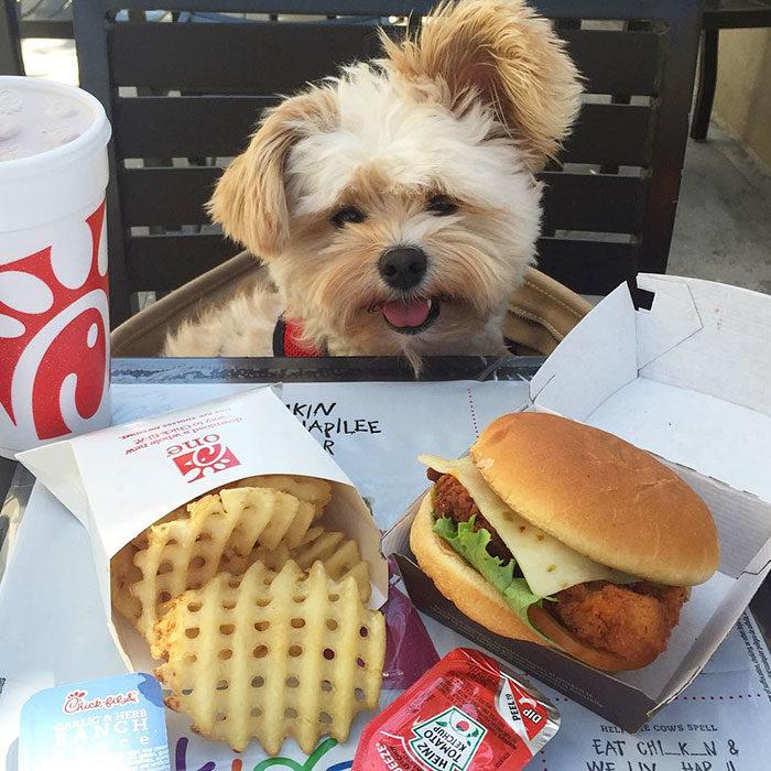 Perro rescatado comiendo hamburguesa con queso