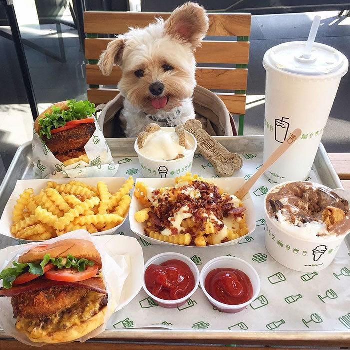 Perro rescatado comiendo hamburguesa