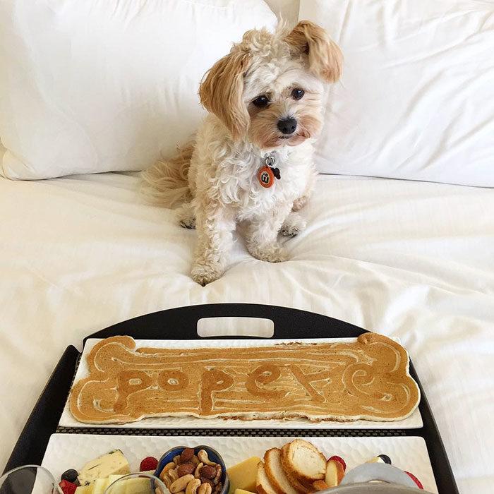Perro rescatado comiendo en la cama