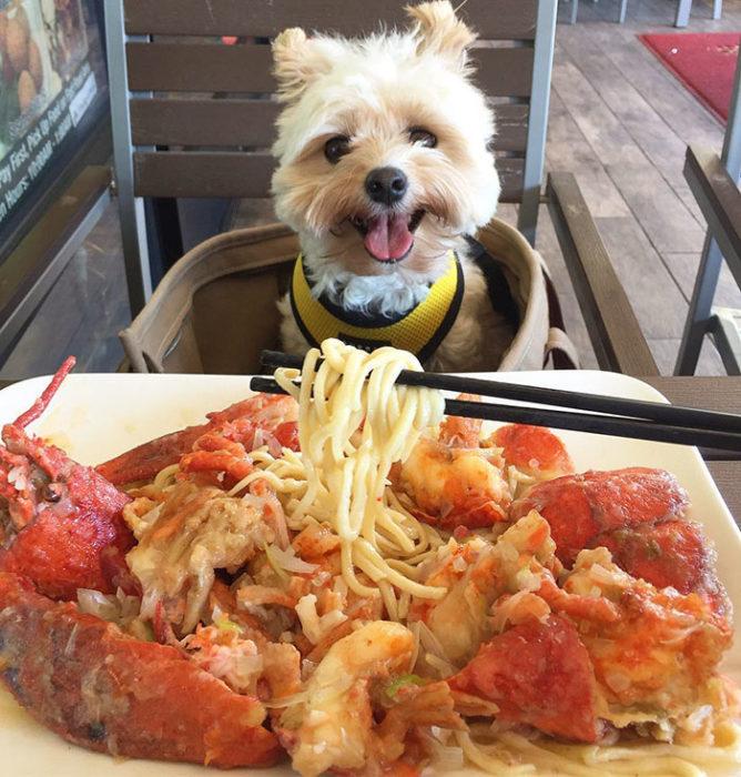 Perro rescatado comiendo espagueti