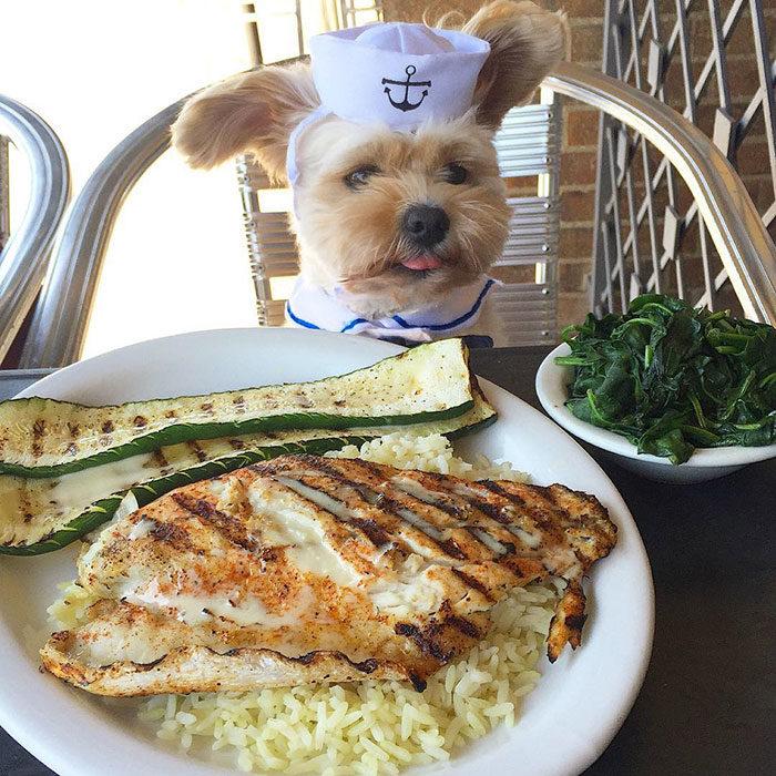 Perro rescatado comiendo pescado