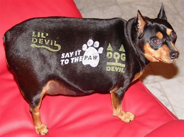 Productos perros - tatuajes para perros