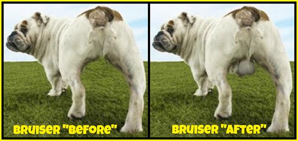 Productos perros - implante de testiculos