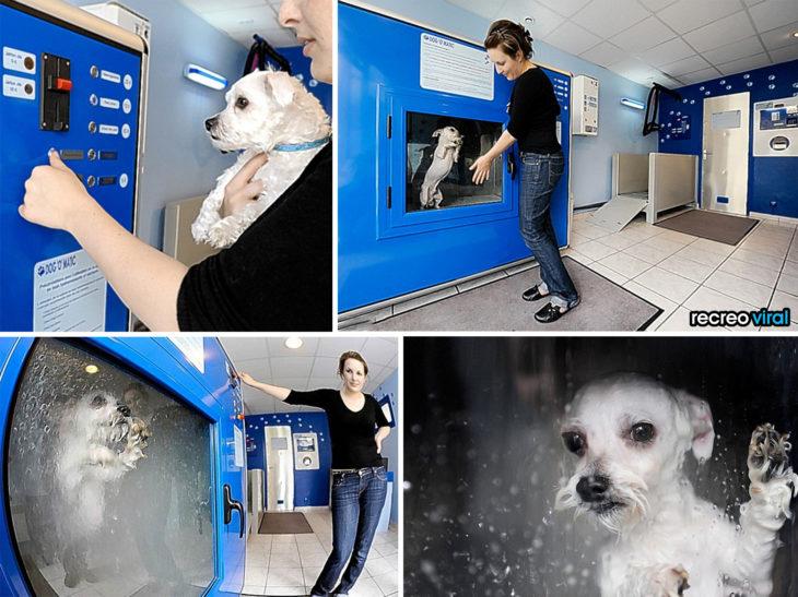 Productos perros - maquina para bañar a perro