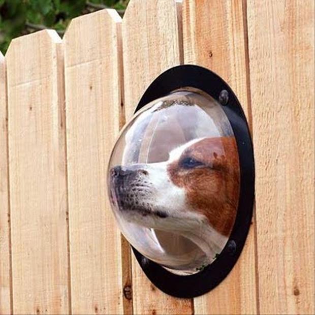 Productos perros - hoyo en la cerca perro