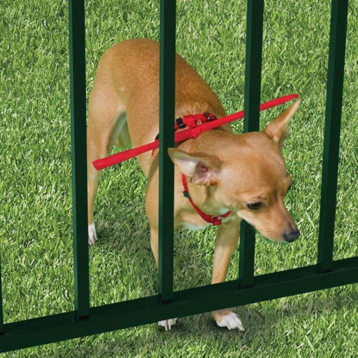 Productos perros - collar para evitar que el perro se salga