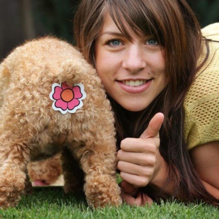 Productos perros - estampa para el trasero del perro
