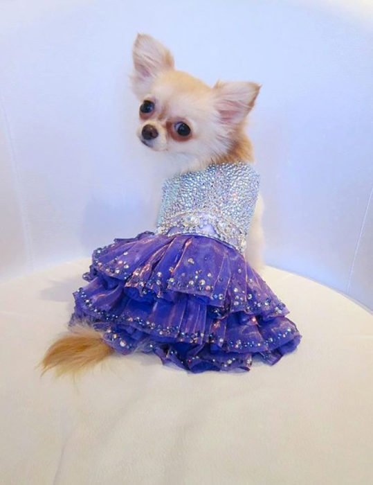 vestido para perro