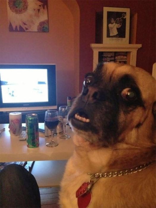 perro en la computadora
