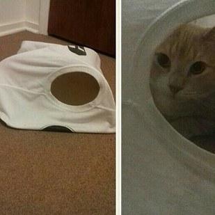 gato en camiseta