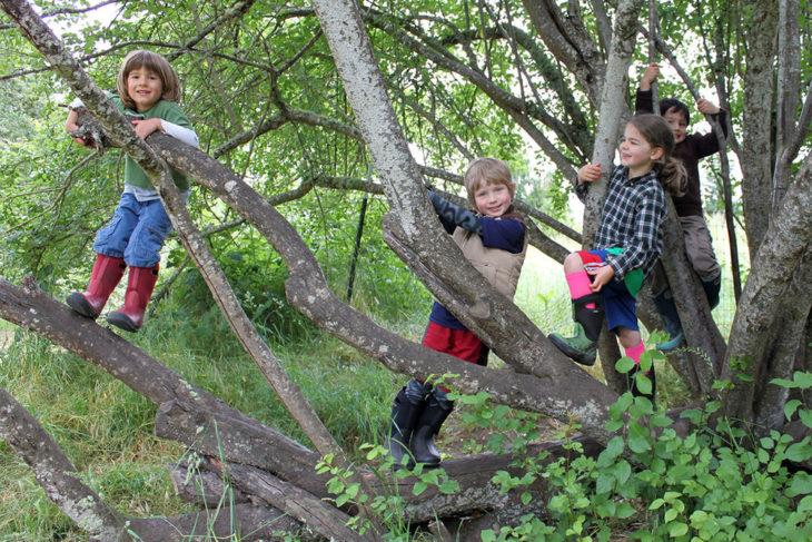 niños sobre un árbol