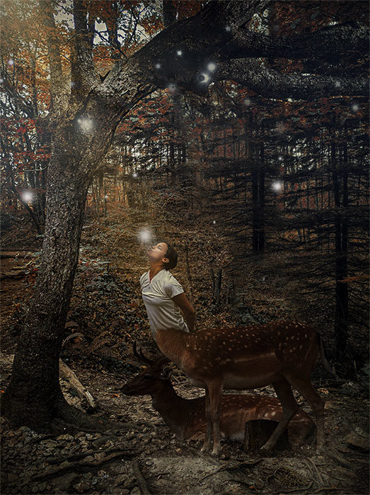 ilusiones en el bosque