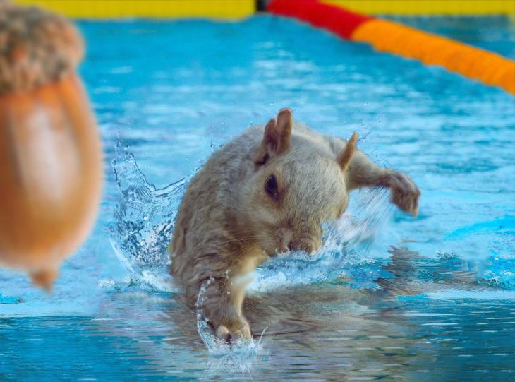 ardilla nadando