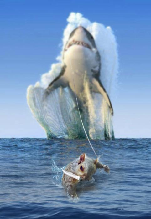 atrapa tiburones