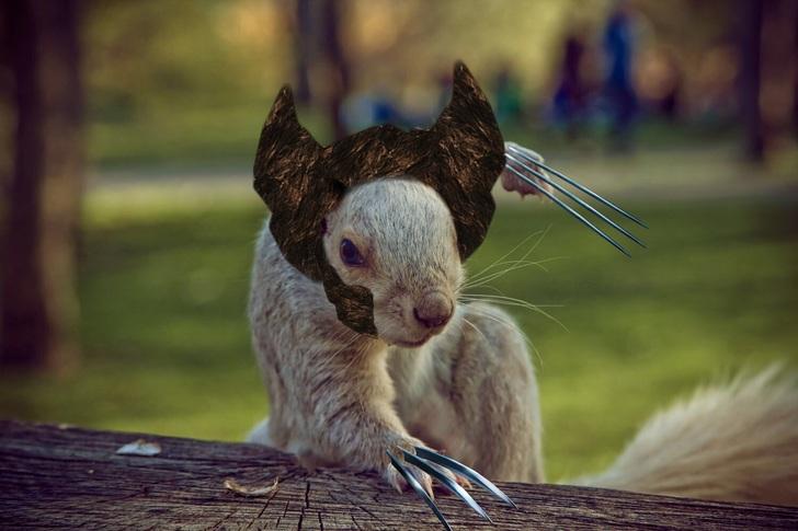 ardilla wolverine