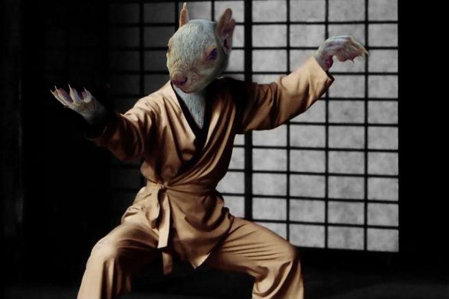 ardilla kung fu