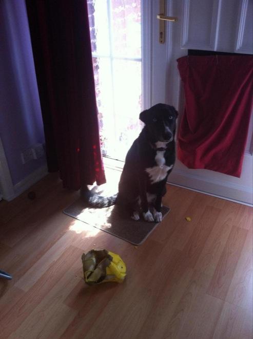 perro con balon