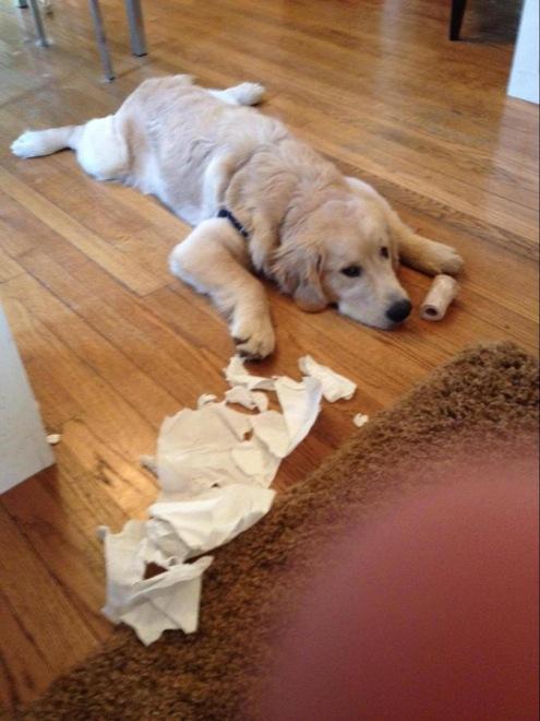 perro papel