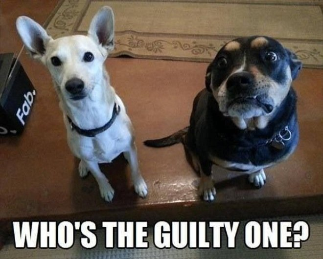 quien tuvo la culpa perros