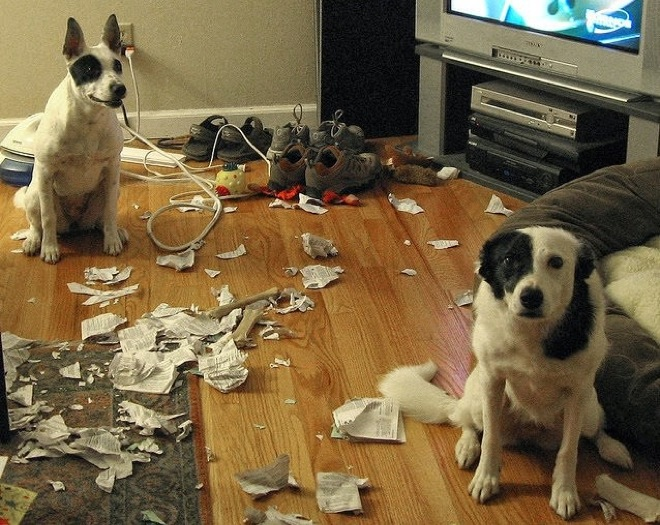 perros papeles