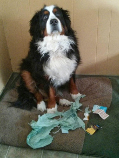 perro rompio bolsa