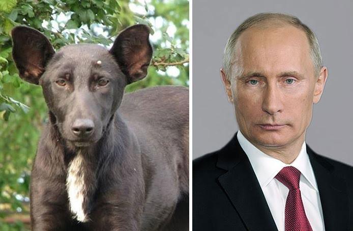 putin y perro