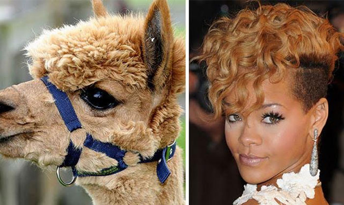 rihanna alpaca
